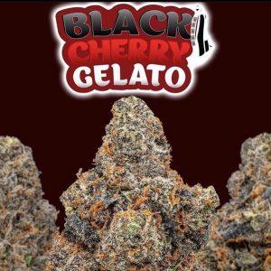 Black cherry gelato marijuana